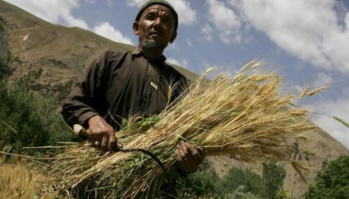 Agricultural biotechnolgies a boon for family farmers, say experts