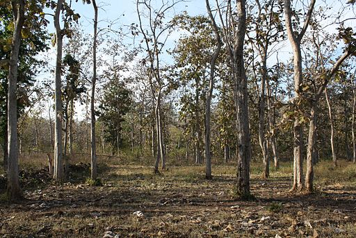 India commits to restore 13 million ha of degraded forest under Bonn Challenge