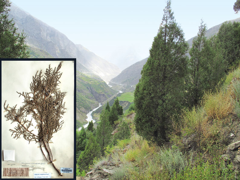Left: Cleghorn collected a specimen of