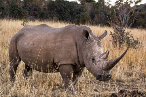 Violent tactics, some of them with deep roots into the region's traumatic past, are being used to defend peace parks and rhinos (ThinkStock Photos)