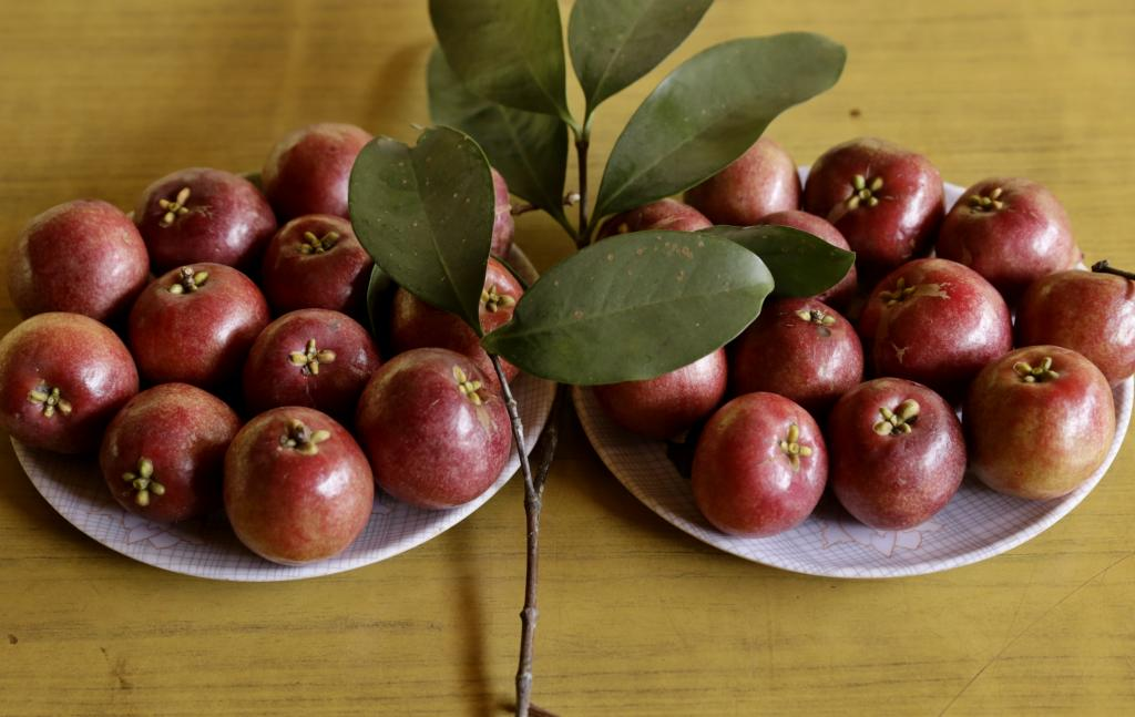 A wild fruit famous for its therapeutic properties, Kokum is cultivated in small plantations in North Karnataka, Goa, southern Maharashtra and parts of Kerala in the Konkan region