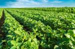 European Parliament opposes import of three herbicide-resistant GM crops