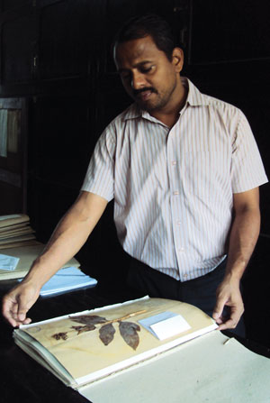 A curator at Blatter Herbarium in