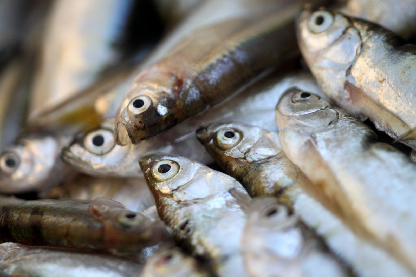 Fisheries: an answer to food security and nutrition