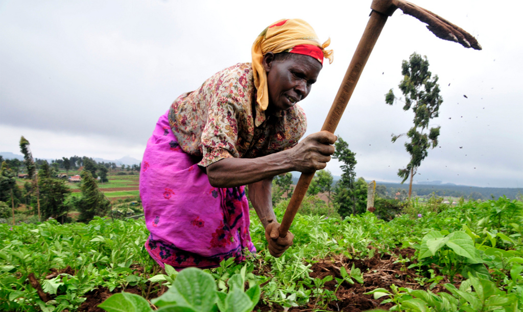 Report sees opportunities for agricultural growth in West Africa