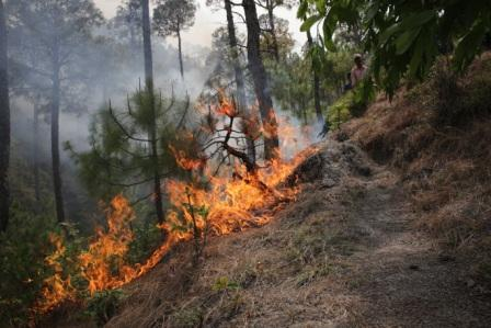 Bastar witnessed more forest fires than Uttarakhand's Pauri Garhwal