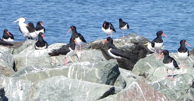 Commitment made to protect threatened seabirds and waterbirds