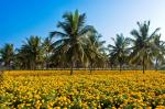 India must reap benefits of booming floriculture industry