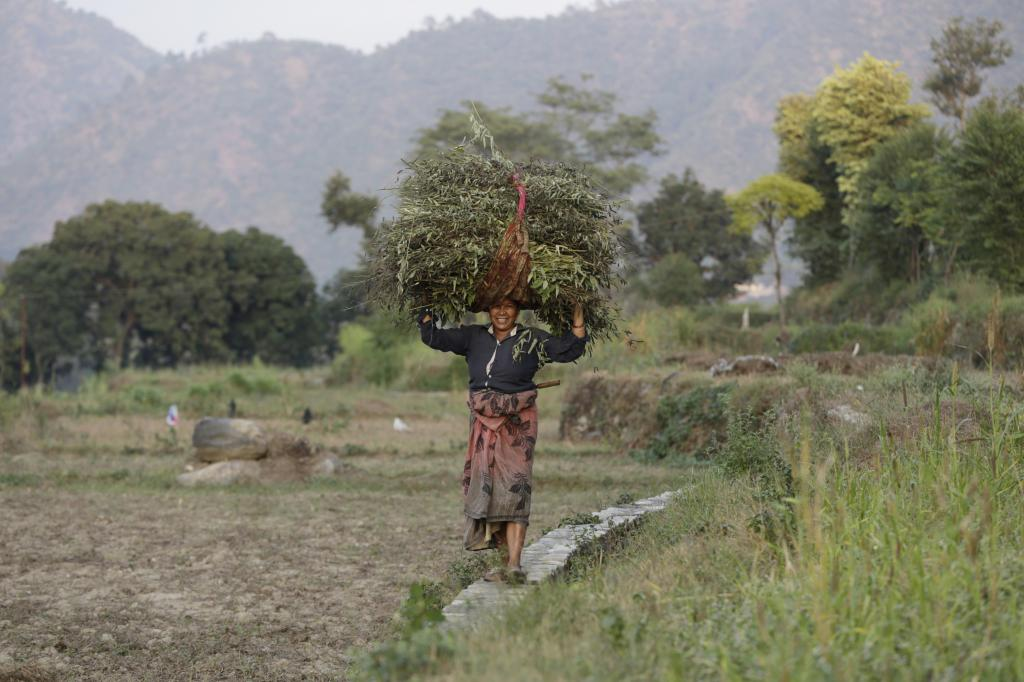 The number of food-insecure people in the mountainous areas had risen 30 per cent between 2000 and 2012 Credit: Vikas Choudhary