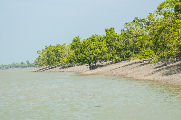 Now, fishing communities join forest dwellers to demand forest rights in Sundarbans