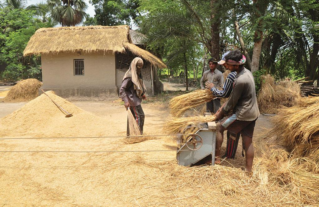 Threshing of paddy in a village in Bangladesh (Source: Creativecommons)