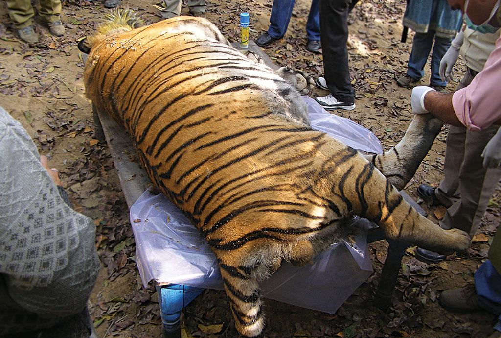 The National Tiger Conservation
