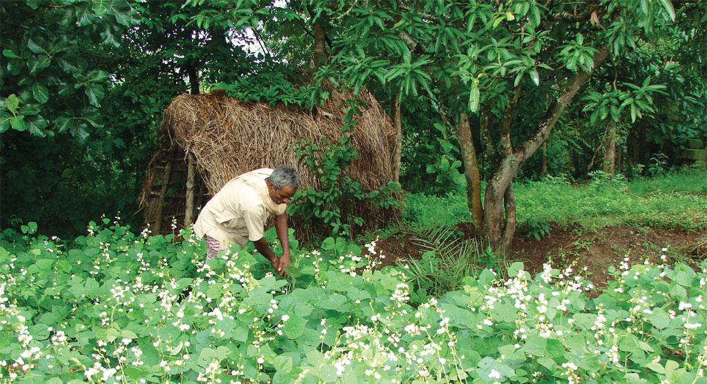 Prabhu Mediwala, a small farmer from Kamdhenu village in Dharwad district, has turned a rocky patch of land into an organic agricultural farm and doubled his income