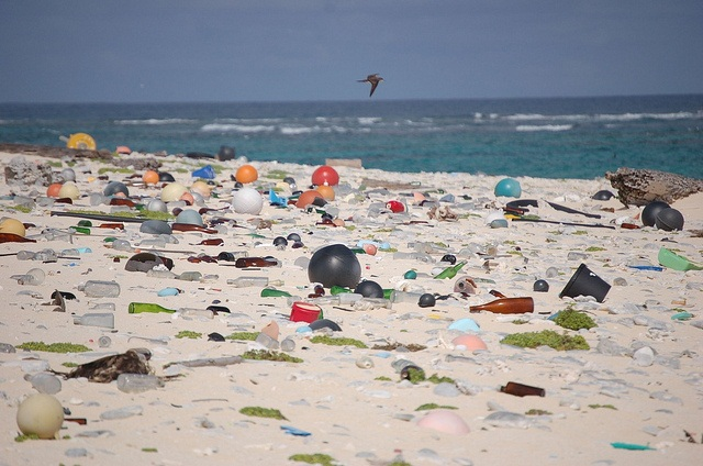 Plastic litter in oceans to outweigh fish population by 2050