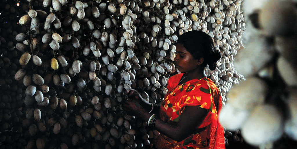 Communities in India can earn up to Rs 4,000 crore from non-timber forest produce like silk cocoon (Photo: Prashant Ravi)