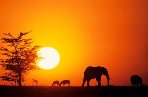SDGs: Governments' commitment to battle illegal wildlife trade applauded