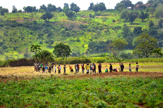 Agriculture key to achieving lasting peace in Central African Republic
