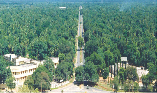A view of Neyveli township surrounded by a dense forest Credit: NLC CSR report