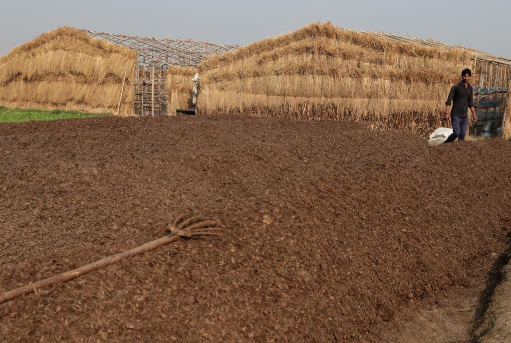 A paddy field (Photo: Vikas Choudhary)
