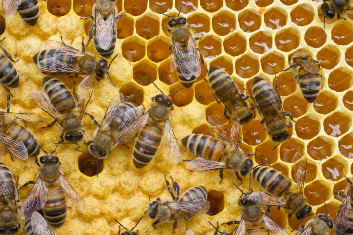 How African honey bees can help mitigate global colony losses