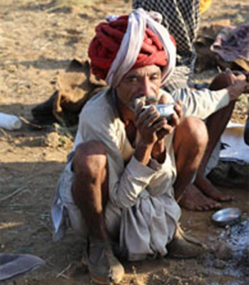 Why Rajasthan's camel protection law is not enough to save its camels