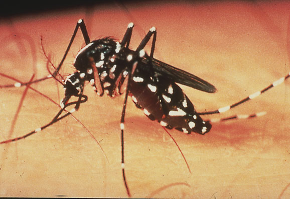 Clinical trials for first dengue treatment could start within a year