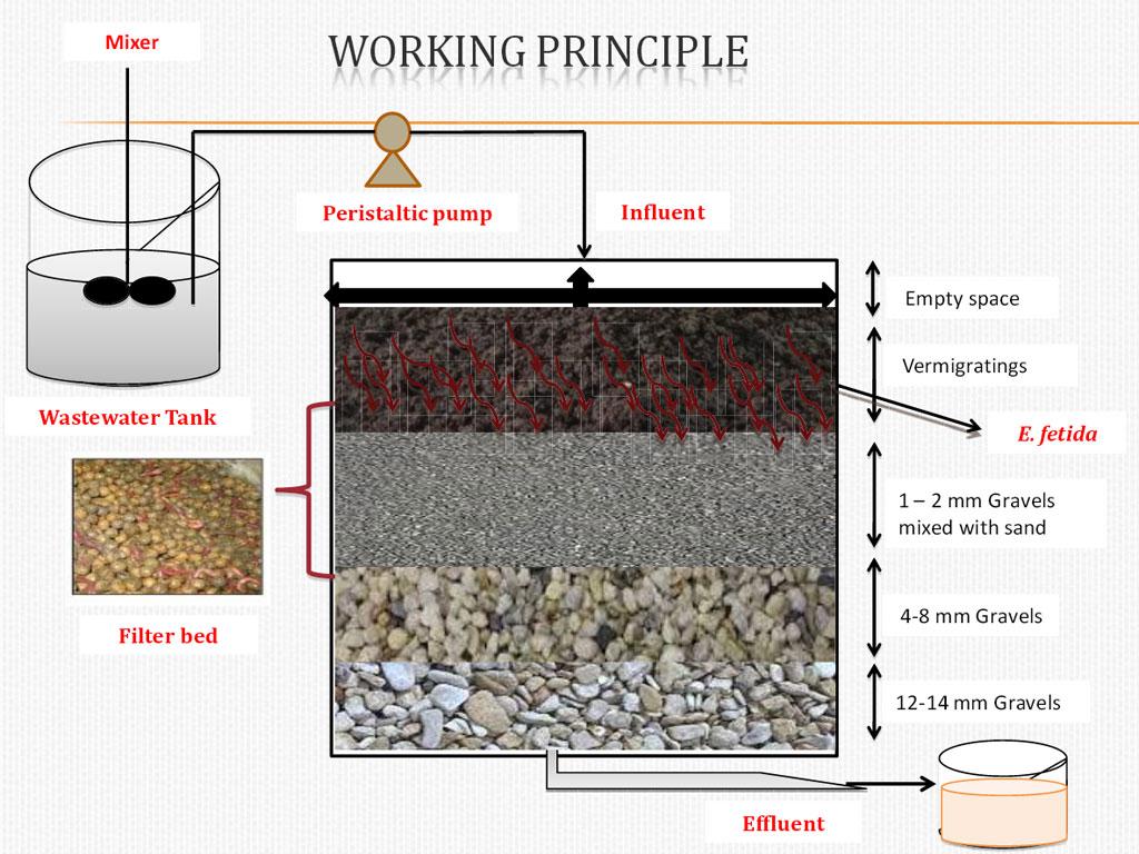 Structure of a vermi-filter (Image courtesy: Sudipti Arora Gupta, Dr B Lal Institute of Biotechnology, Jaipur)