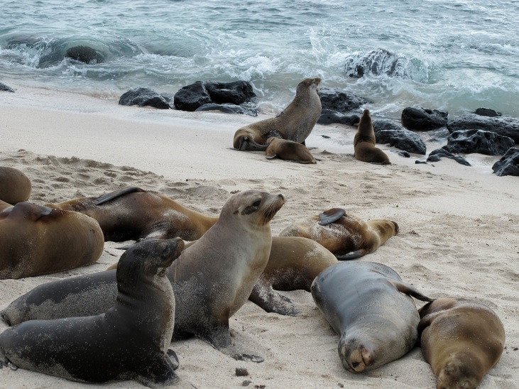 Molting seals add mercury to seawater, reveals study