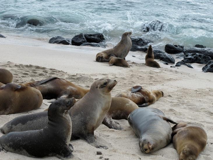 Molting seals add mercury to seawater, reveals study (Mikko Koponen/Flickr)