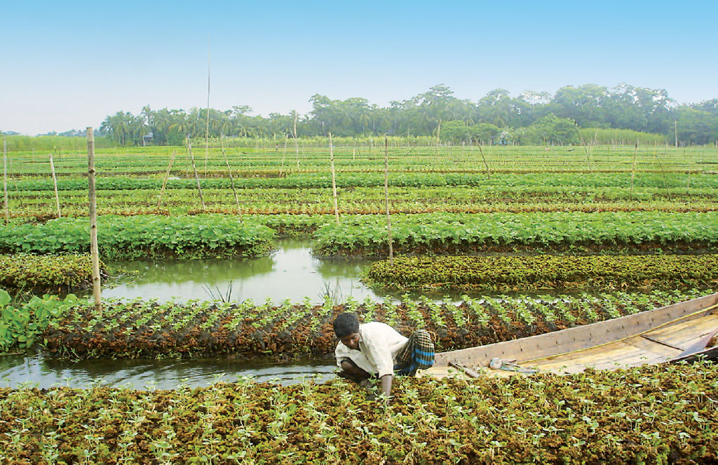 Floating farms of Bangladesh have been recognised as globally important agricultural heritage (COURTESY: ATIQ RAHMAN / MUSLEM UDDIN MIAH, BCAS)