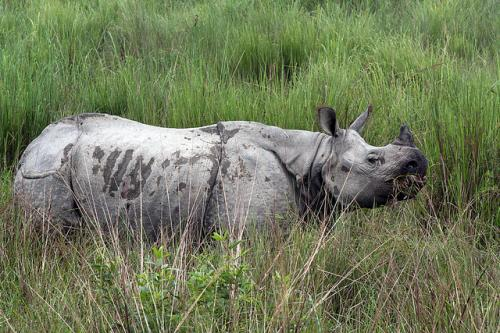 Eight including three guards arrested in rhino poaching case