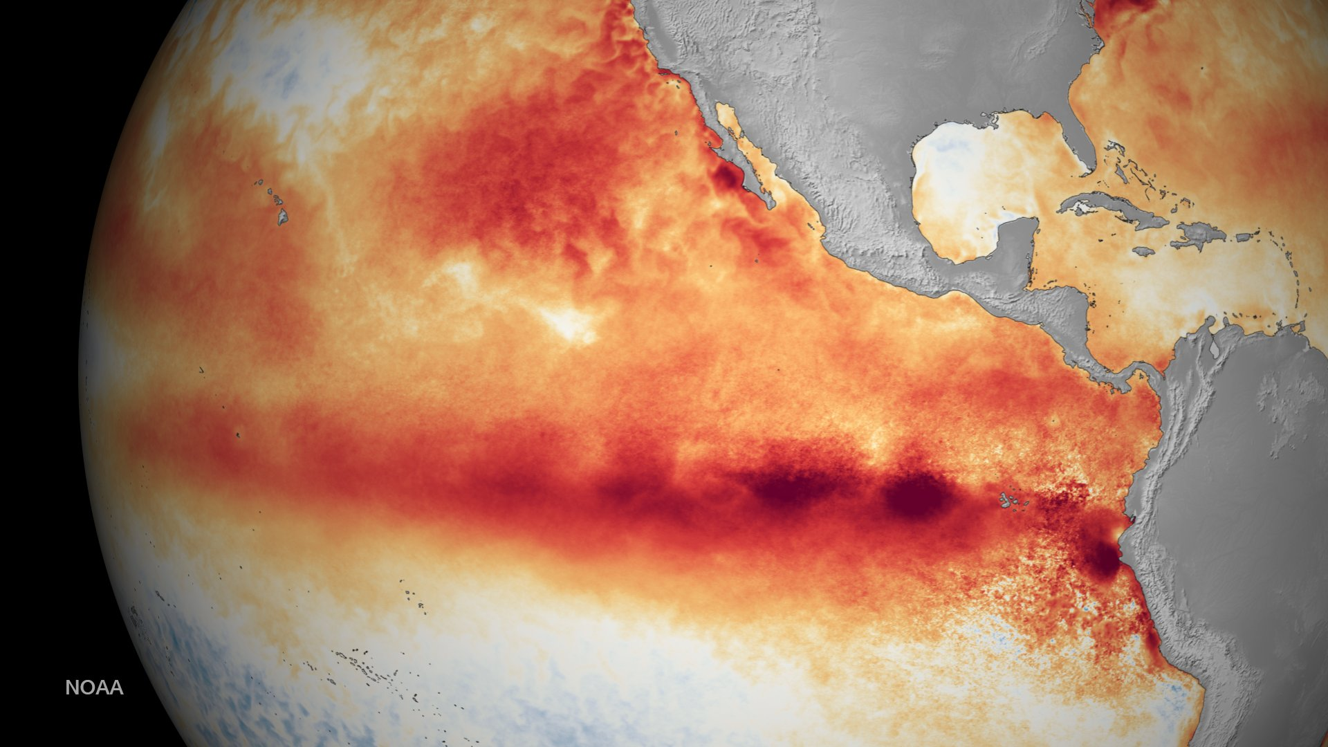 IMAGE 3: Representation of Sea Surface Temperature anomalies in the Pacific Ocean between 31st August and 6th September 2015. Red colour depicts above normal temperatures and blue colour depicts below normal temperatures. Courtesy: NOAA