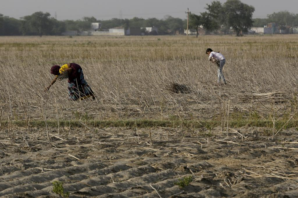 Reports from Punjab, Haryana, Uttar Pradesh and Maharashtra confirmed that thousands of acres of standing crops (mainly wheat and mustard) had been destroyed