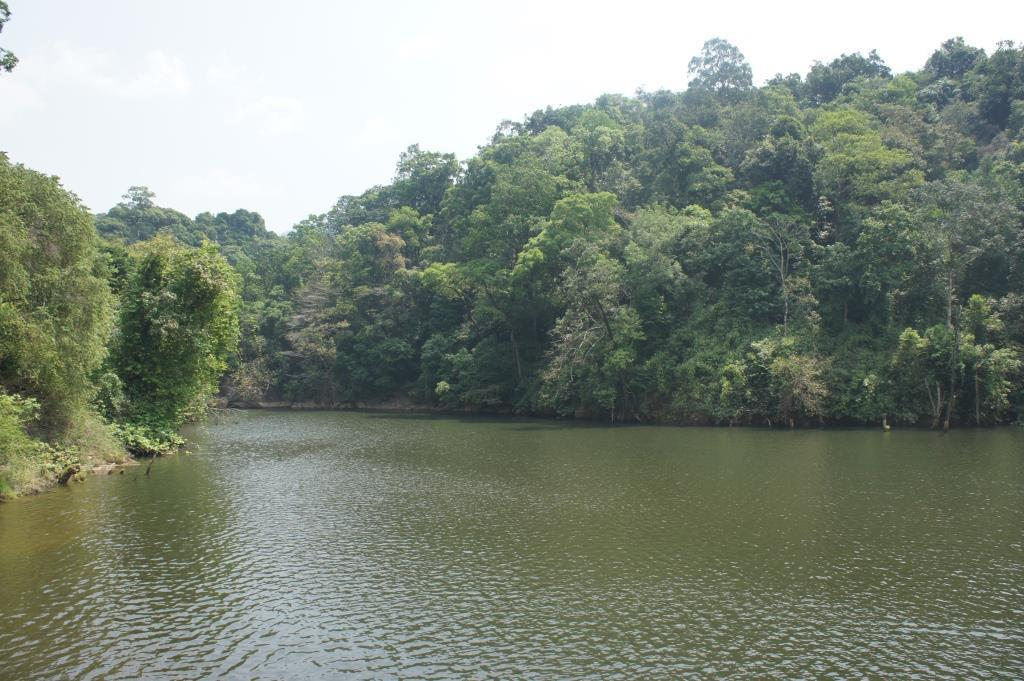 A view within the Western Ghats (Photo: JONAS HAMBERG)