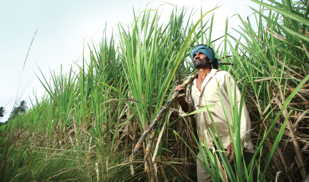 Mature