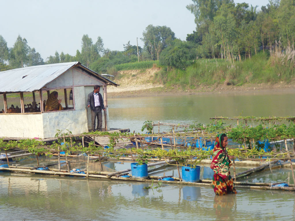 This modern avatar of floating garden in Pabna also has a fish enclosure and a duck coop (Photo: Archana Yadav)