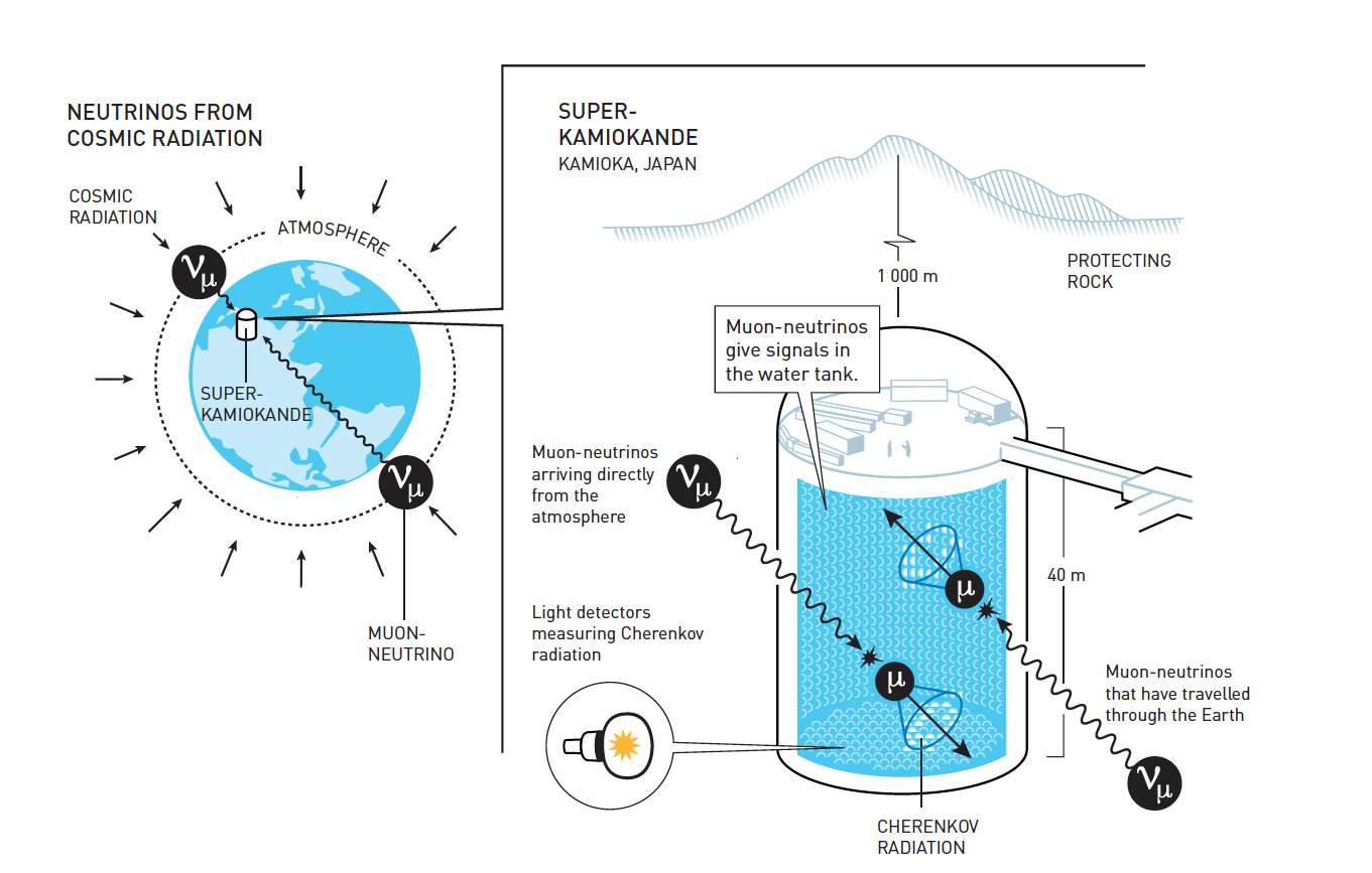 Super-Kamiokande detects atmospheric neutrinos. When a neutrino collides with a water molecule in the tank, a rapid, electrically charged particle is created. This generates Cherenkov radiation that is measured by the light sensors. The shape and intensity of the Cherenkov radiation reveals the type of neutrino that caused it and from where it came. The muon-neutrinos that arrived at SuperKamiokande